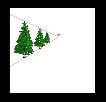 row of equal trees